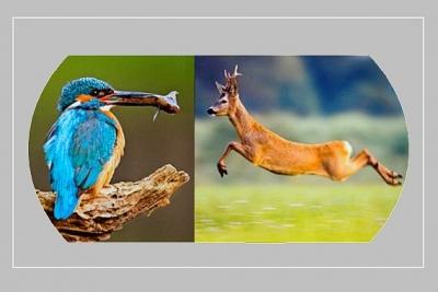 Skryté krásy divokej prírody na fotografiách