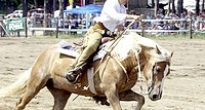 Kovbojom Muránskeho rodea ušli pred súťažou do lesa teliatka