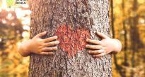 Súťaž Strom roka 2021 pre školy: Vyhrajte výsadbový materiál do vašej záhrady
