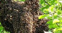 Včelí peľ možno bez rozpakov označiť ako malý zázrak