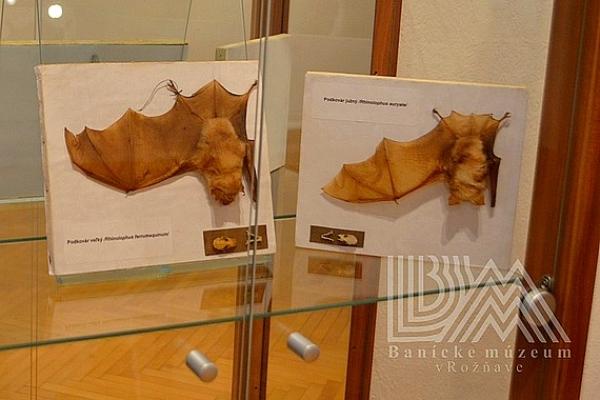 Dve výstavy Natura excelenta a Špirhač, gacek, trúlelek otvorili v Baníckom múzeu v Rožňave