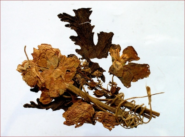 Kytička sušených kvetov z bitky oBranisko pri Prešove