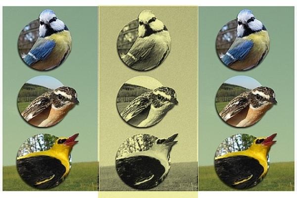 """Výstava """"Vtáky Gemerskej pahorkatiny"""" predstaví výsledky desaťročného výskumu vtáctva tohto územia"""