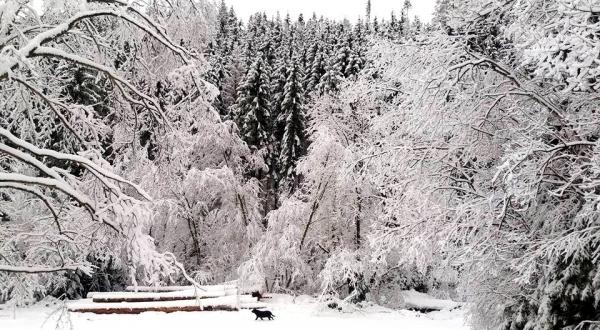Obrázky z februárovej zimy na Gemeri po jej najnovšej nádielke