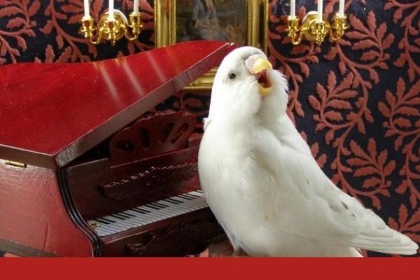 V kurze vtáčieho spevu sa naučíte rozlišovať 35 známych druhov vtákov