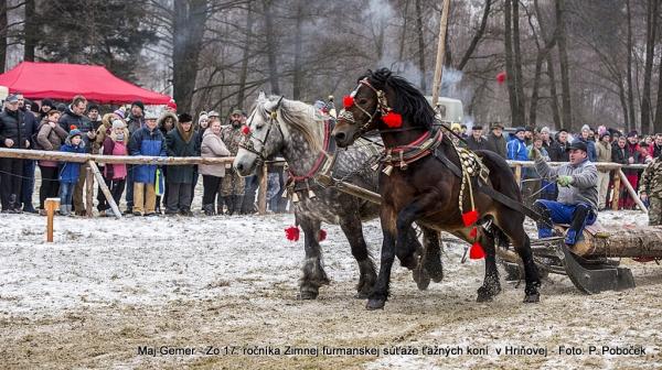 Najlepší furman v Zimnej súťaži ťažných koní získal hriňovskú fujaru