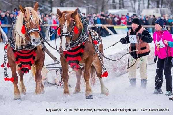 Pohľadnica zo Zimnej súťaže ťažných koní v blízkosti Hriňovej