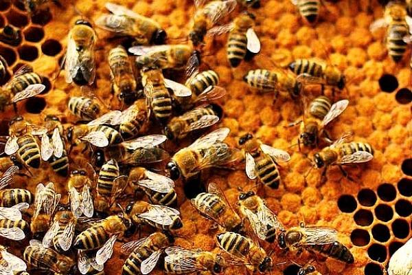 Farmička a Gemerské grúne, o. z. pripravili včelárske školenie o chove matiek a tvorby odložencov